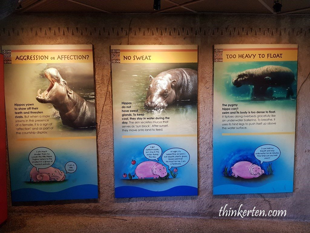 Singapore Zoo - Hippo