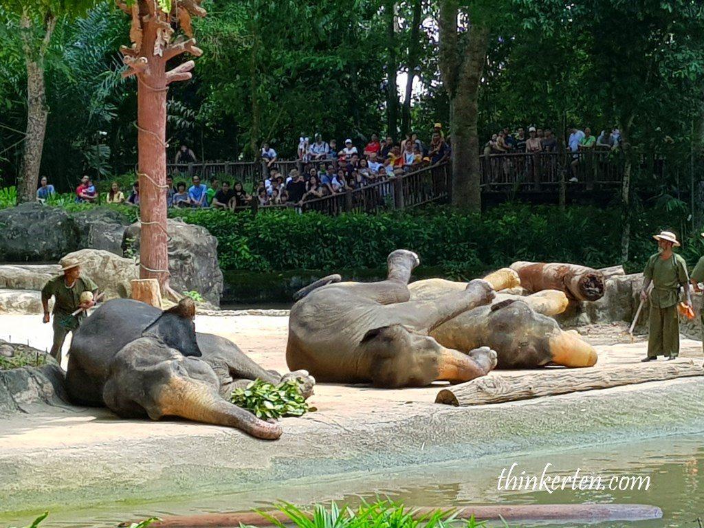 Elephants show Singapore Zoo