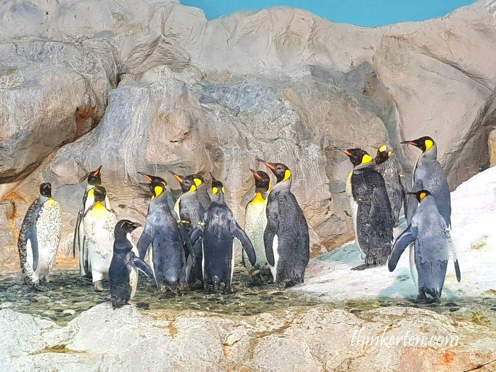 Penguin Cove at Singapore Jurong Bird Park