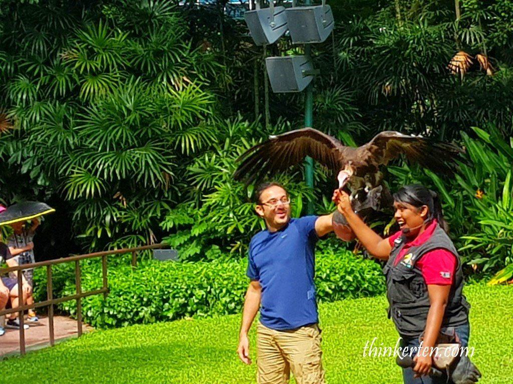 Kings of Skies Show at Hawks Arena at Jurong Bird Park