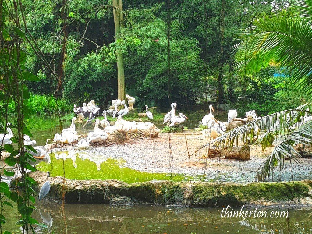 Pelican Cove at Jurong Bird Park