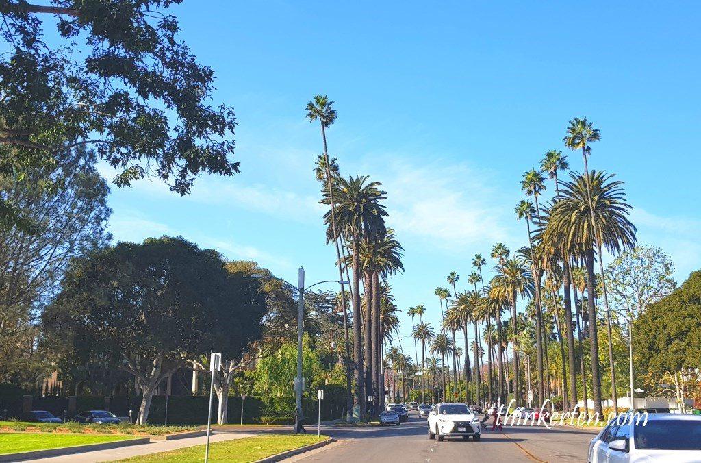 Beverly Hills Palm Trees Movie Scene