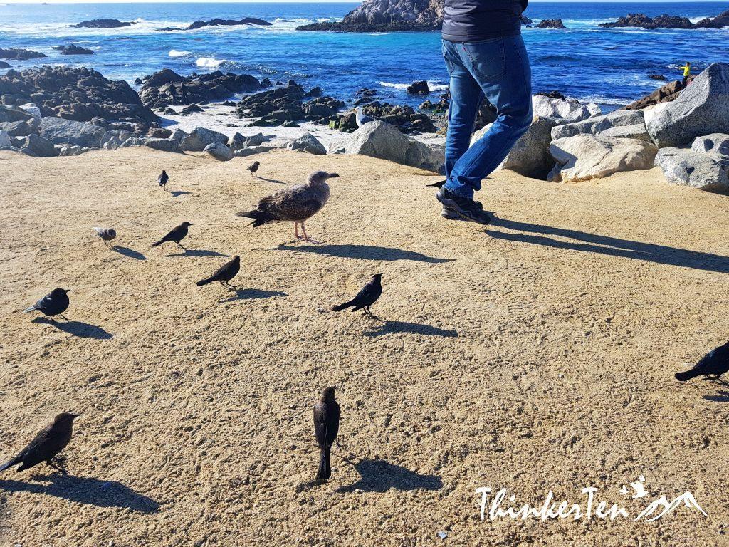US Road Trip : 17 Miles Drive Monterey