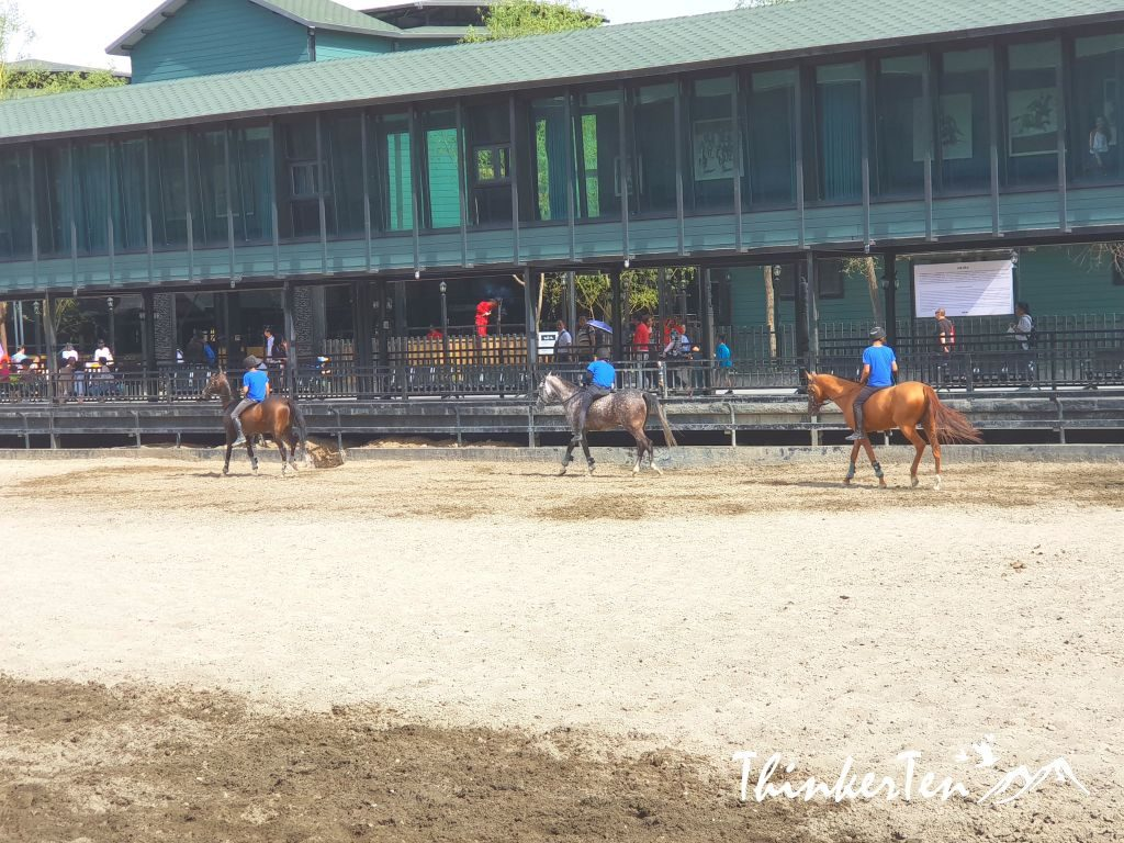 China : Xinjiang Ancient Ecological Park boost Akhal-teke Horse / 汗血宝马