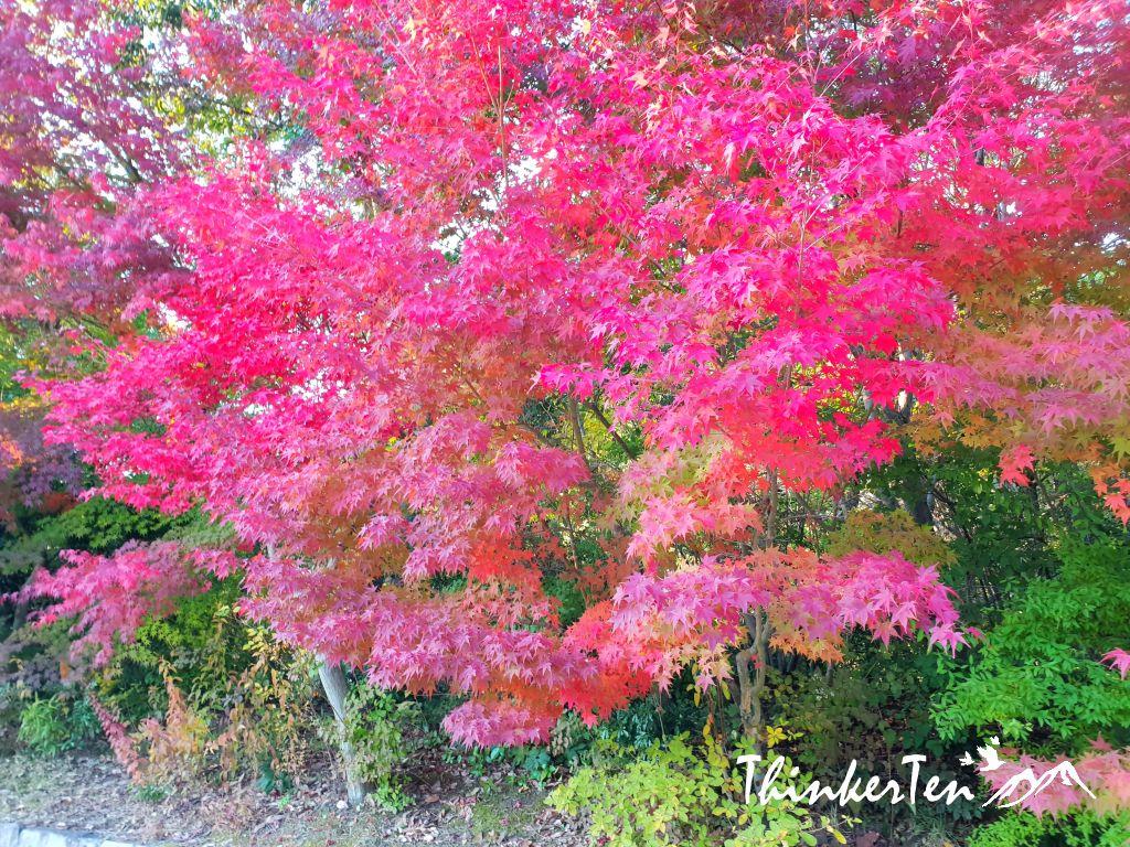 Autumn Color in Sankeien Garden @ Hiroshima Airport