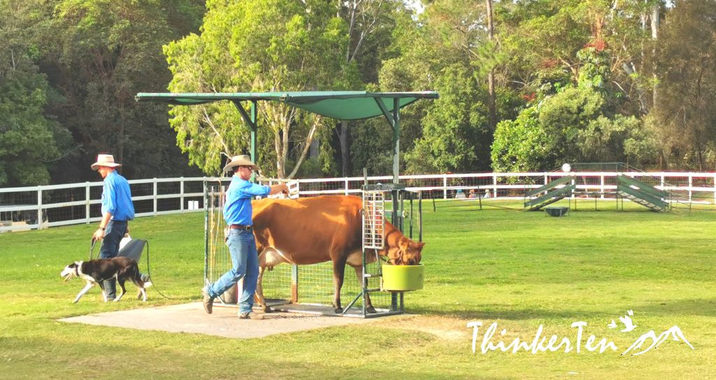 Australian Farm Experience - Paradise Country Gold Coast Queensland
