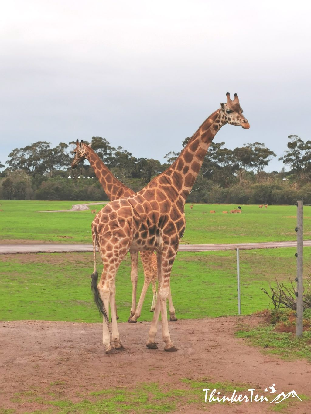 A Taste of African Savannah in Werribee Open Range Zoo, Melbourne Australia